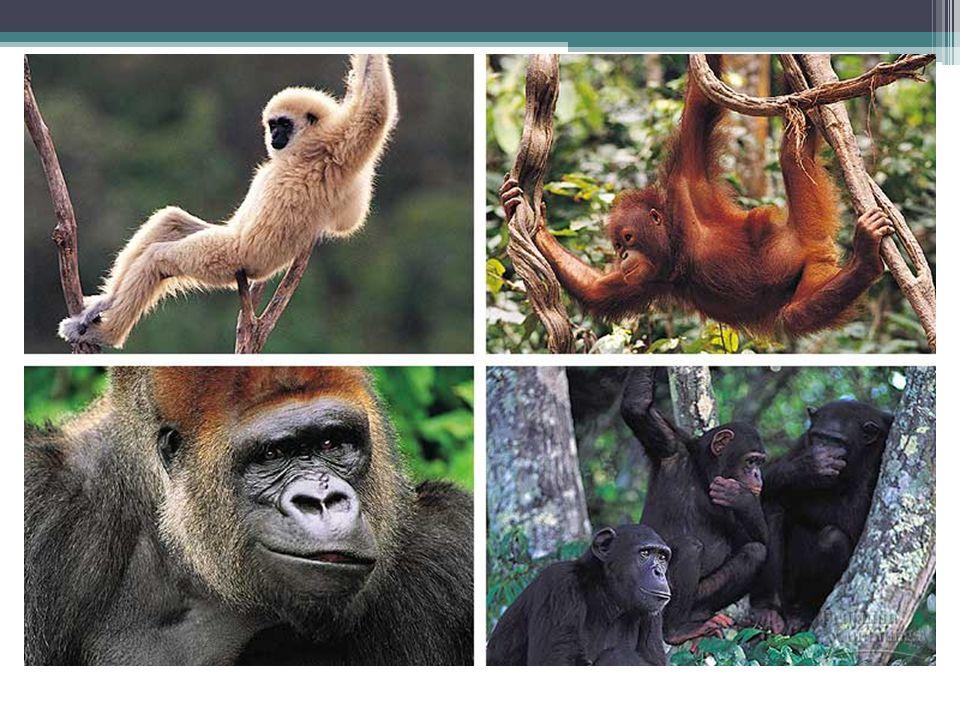 Marsupial & Placental Mammals Marsupial Placental