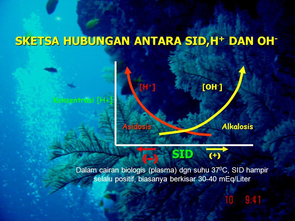 SKETSA HUBUNGAN ANTARA SID,H + DAN OH - SID (–)(–) (+)(+)(+)(+) [H + ] [OH - ] Dalam cairan biologis (plasma) dgn suhu 37 0 C, SID hampir selalu posit
