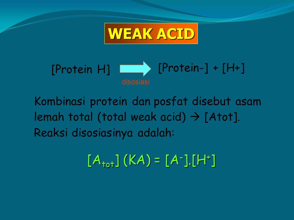 Kombinasi protein dan posfat disebut asam lemah total (total weak acid)  [Atot]. Reaksi disosiasinya adalah: [A tot ] (KA) = [A - ].[H + ] [Protein H