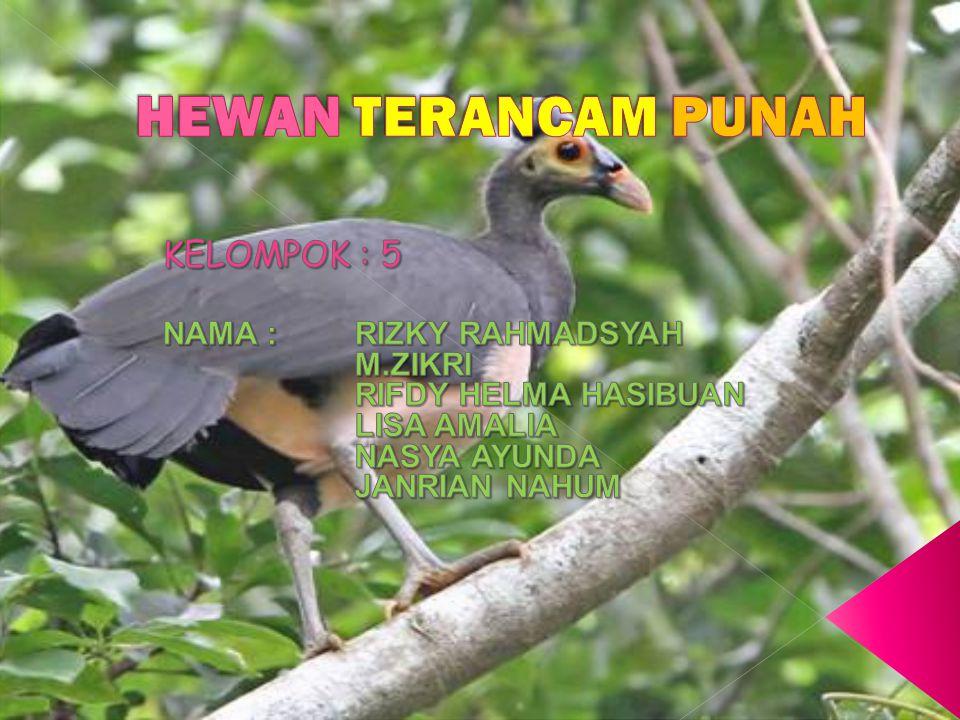 Badak sumatera (Dicerorhinus sumatrensis) merupakan salah satu spesies badak yang dipunyai Indonesia selain badak jawa (Rhinocerus sondaicus).