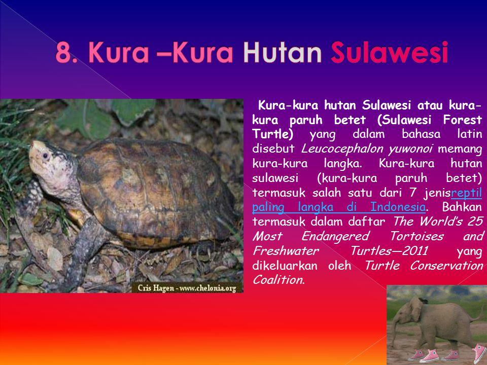 Kura-kura hutan Sulawesi atau kura- kura paruh betet (Sulawesi Forest Turtle) yang dalam bahasa latin disebut Leucocephalon yuwonoi memang kura-kura l