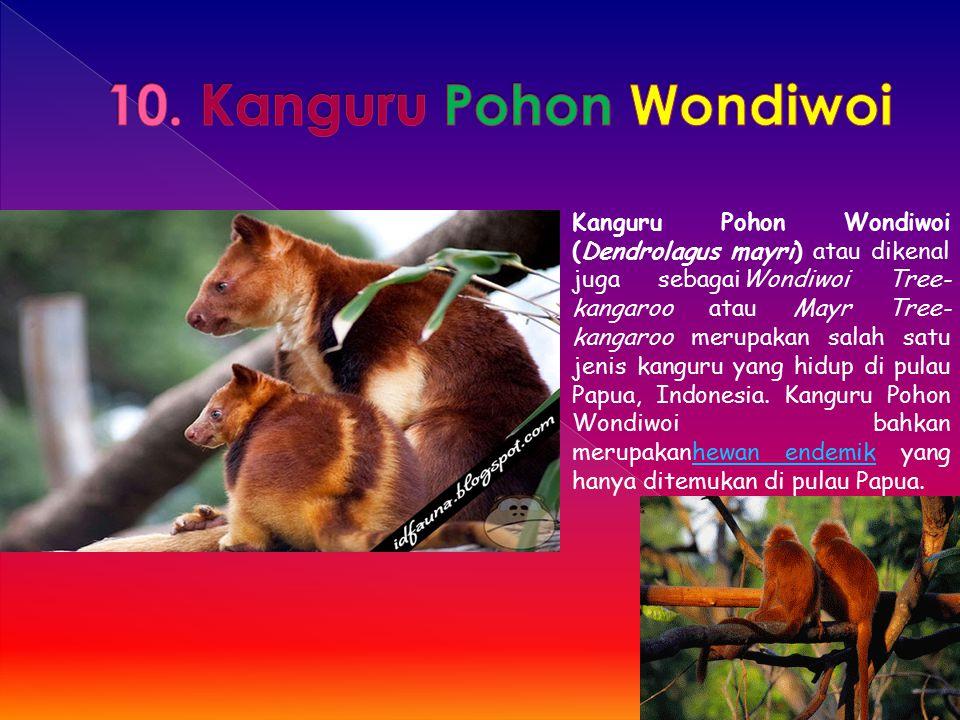 Kanguru Pohon Wondiwoi (Dendrolagus mayri) atau dikenal juga sebagaiWondiwoi Tree- kangaroo atau Mayr Tree- kangaroo merupakan salah satu jenis kangur