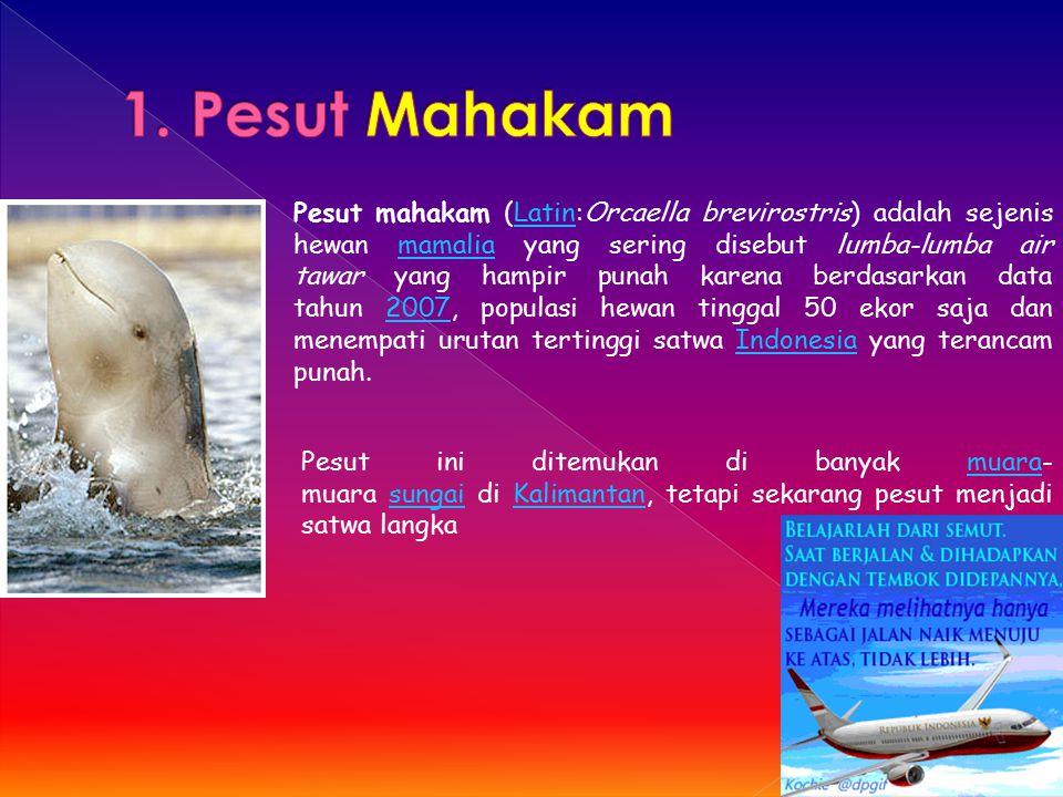 Pesut mahakam (Latin:Orcaella brevirostris) adalah sejenis hewan mamalia yang sering disebut lumba-lumba air tawar yang hampir punah karena berdasarka