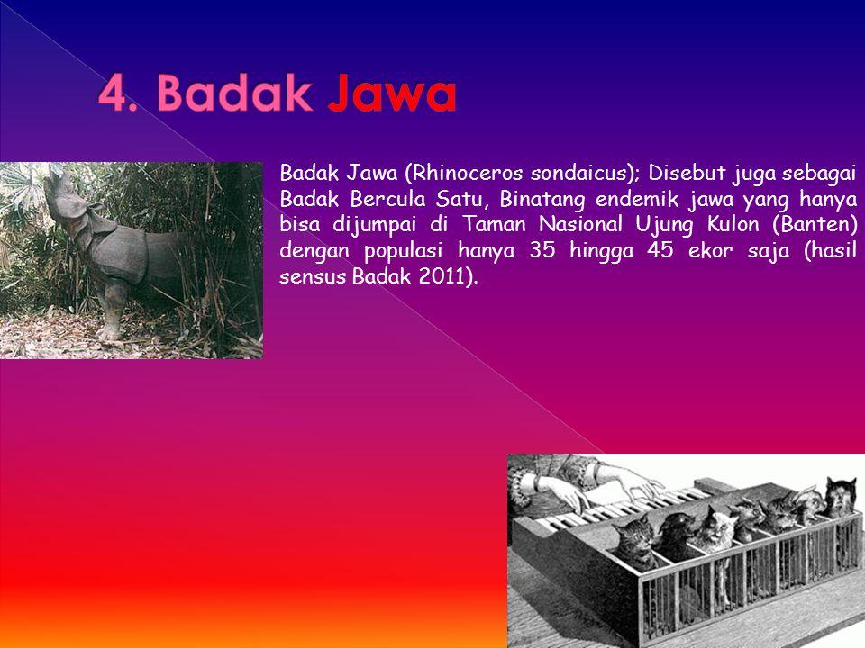 Badak Jawa (Rhinoceros sondaicus); Disebut juga sebagai Badak Bercula Satu, Binatang endemik jawa yang hanya bisa dijumpai di Taman Nasional Ujung Kul