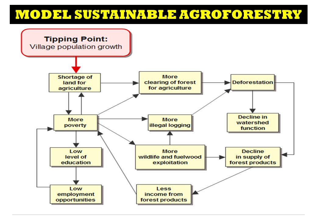 MODEL SUSTAINABLE AGROFORESTRY