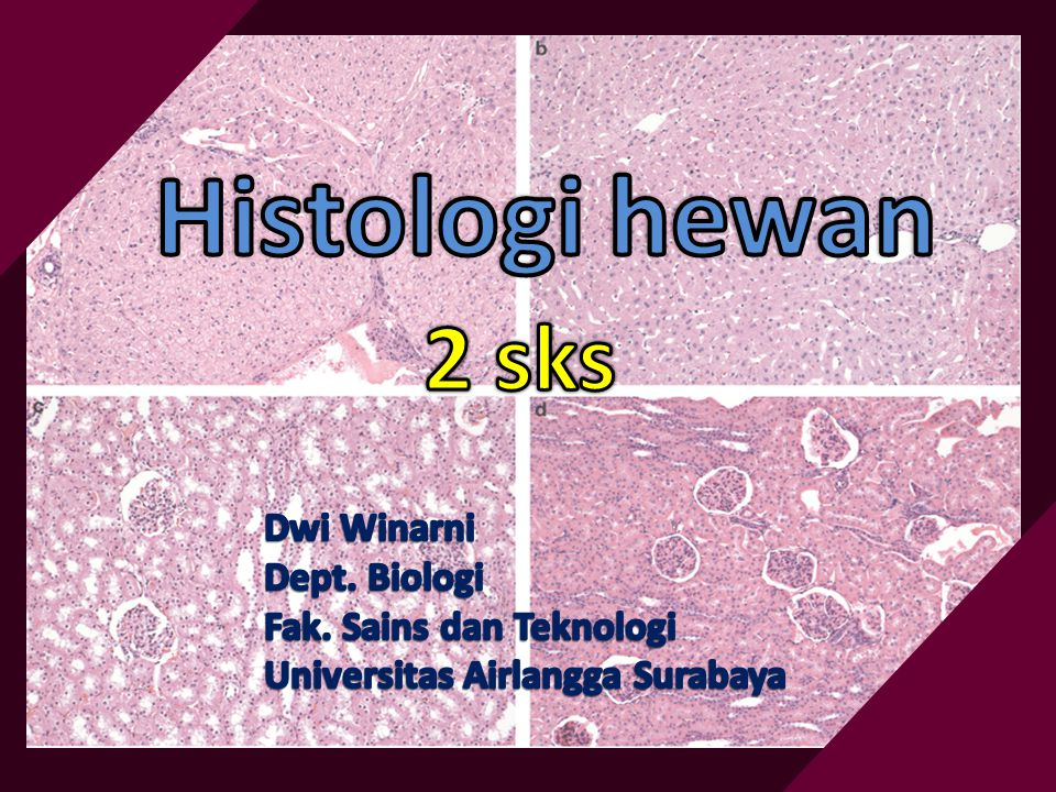 World Journal of Zoology 3 (2): 59-62, 2008 ISSN 1817-3098 © IDOSI Publications, 2008 Histological Structure of the Kidney of Insectivorous Bats A.