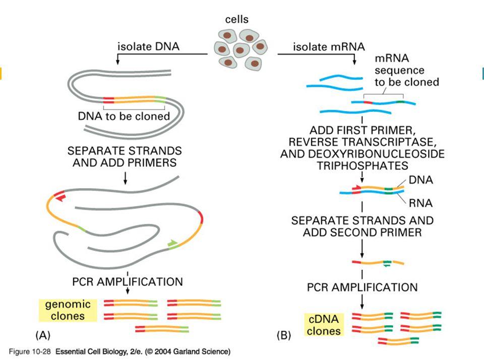 10_28_PCR_clones.jpg