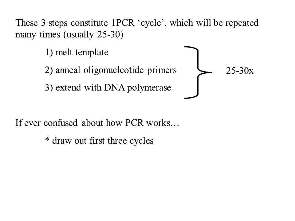 These 3 steps constitute 1PCR 'cycle', which will be repeated many times (usually 25-30) 1) melt template 2) anneal oligonucleotide primers 3) extend with DNA polymerase If ever confused about how PCR works… * draw out first three cycles 25-30x