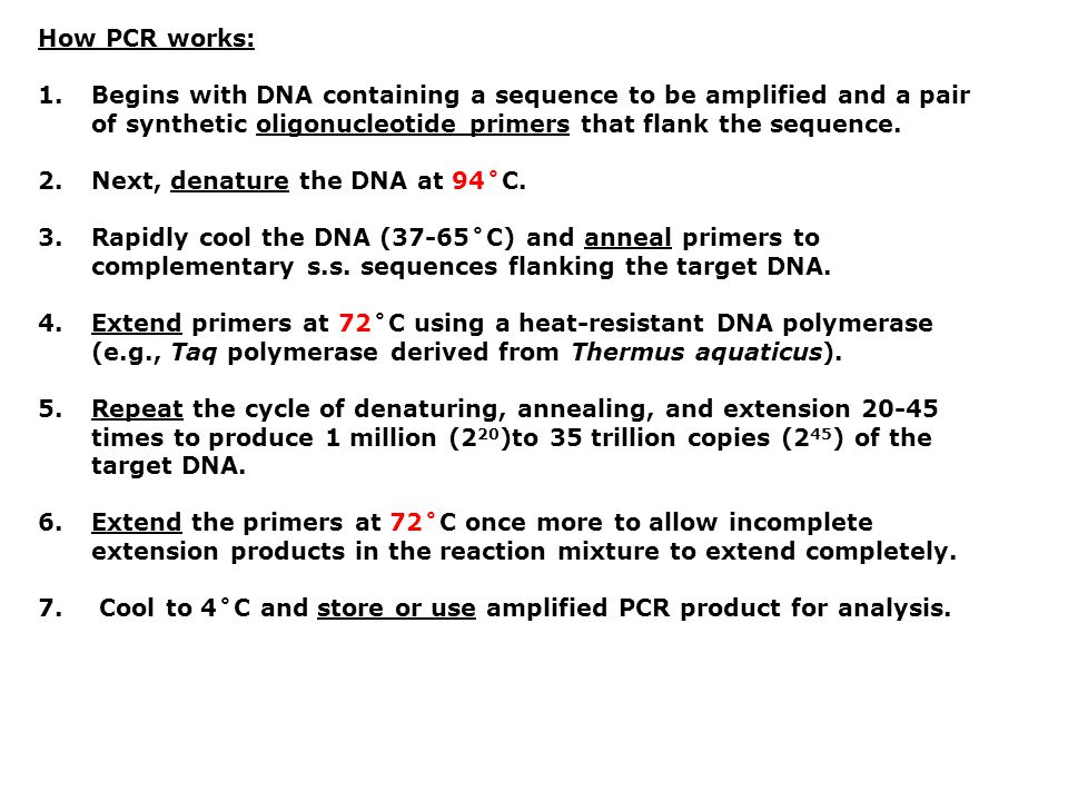 Example thermal cycler protocol used in lab: Step 17 min at 94˚CInitial Denature Step 245 cycles of: 20 sec at 94˚CDenature 20 sec at 64˚CAnneal 1 min at 72˚CExtension Step 37 min at 72˚CFinal Extension Step 4Infinite hold at 4˚CStorage BIOL 362 samples processed in: MJ Research DNA Engine Dyad