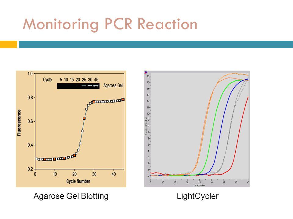 Monitoring PCR Reaction Agarose Gel BlottingLightCycler