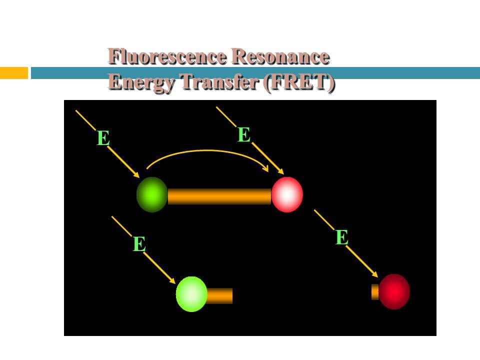 Fluorescence Resonance Energy Transfer (FRET) E E E E