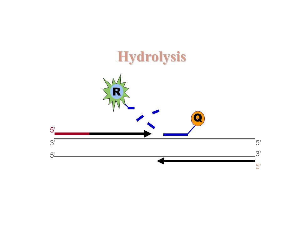Hydrolysis 5' 3' 5' 3' 5' Q R