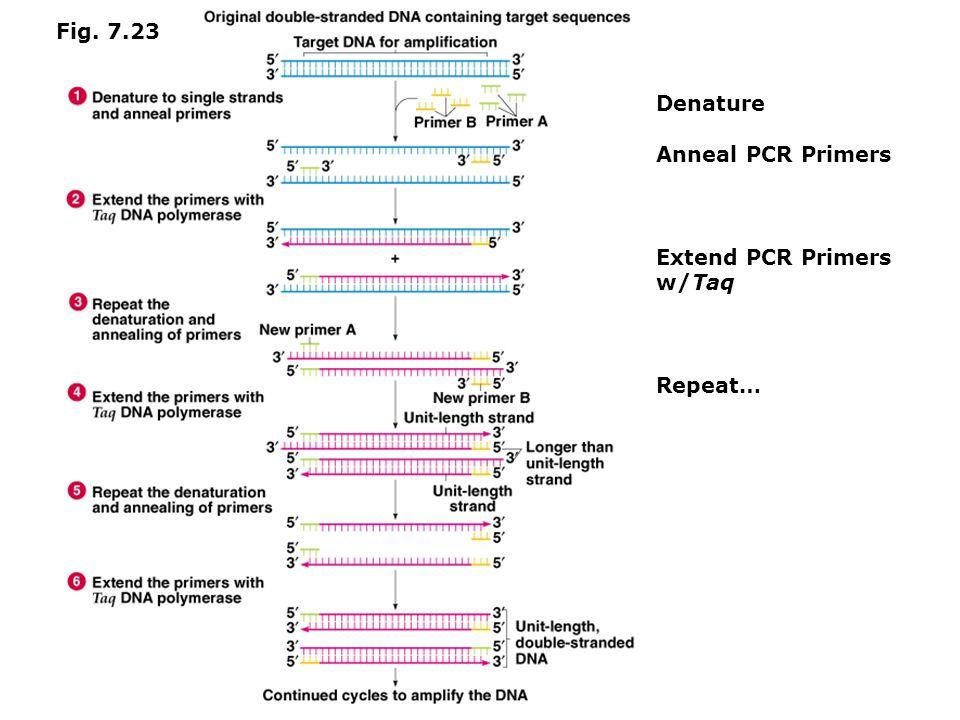 Molecular Beacons are hybridization probes