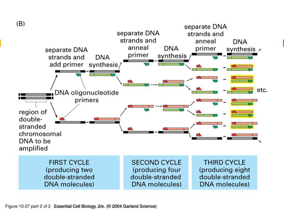10_27_2_PCR_amplify.jpg
