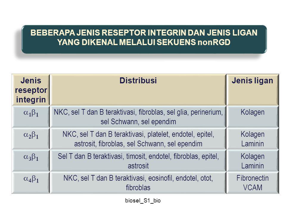 biosel_S1_bio Jenis reseptor integrin DistribusiJenis ligan  NKC, sel T dan B teraktivasi, fibroblas, sel glia, perinerium, sel Schwann, sel