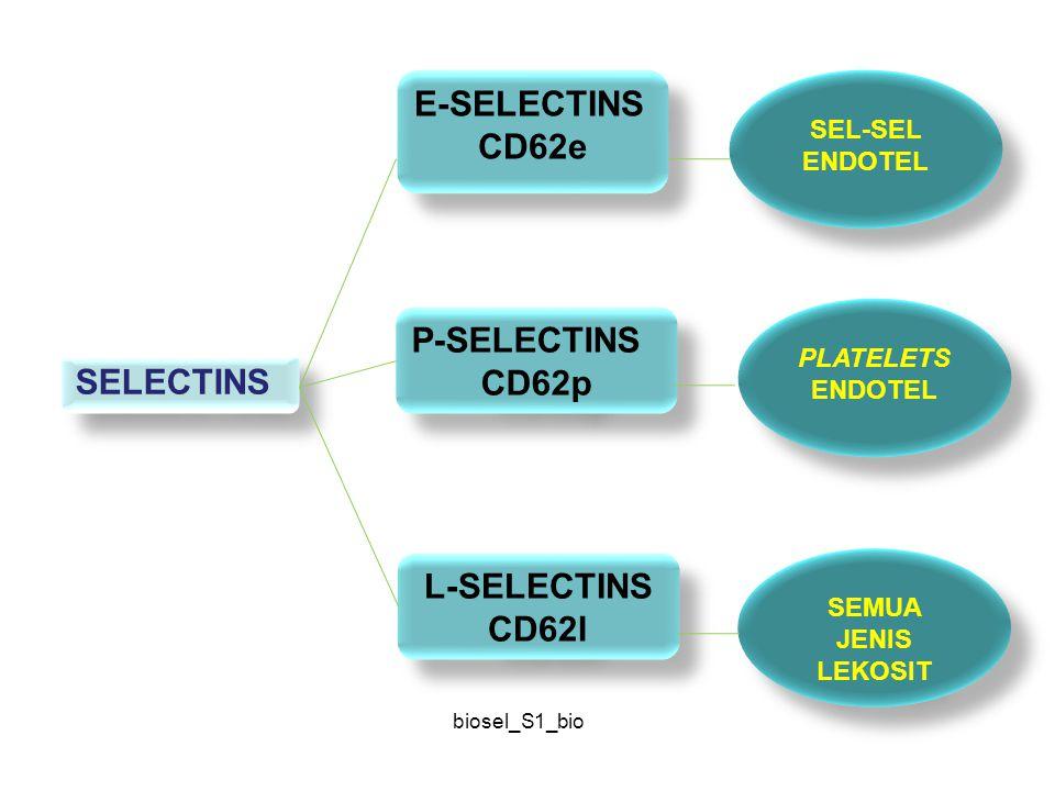 biosel_S1_bio SELECTINS E-SELECTINS CD62e E-SELECTINS CD62e P-SELECTINS CD62p P-SELECTINS CD62p L-SELECTINS CD62l L-SELECTINS CD62l SEL-SEL ENDOTEL PL