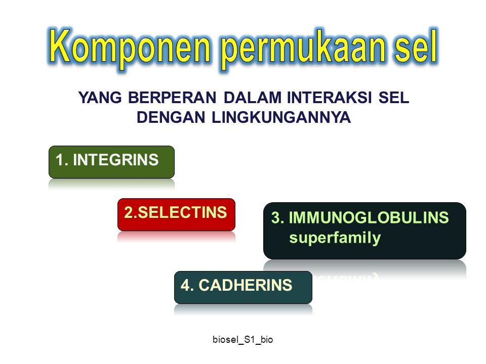 biosel_S1_bio LM= laminin