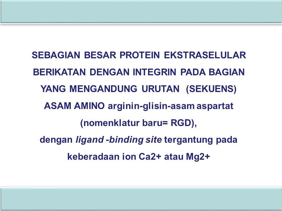 biosel_S1_bio SEBAGIAN BESAR PROTEIN EKSTRASELULAR BERIKATAN DENGAN INTEGRIN PADA BAGIAN YANG MENGANDUNG URUTAN (SEKUENS) ASAM AMINO arginin-glisin-as