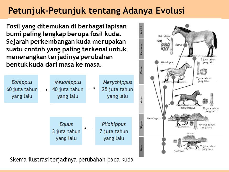 Fosil yang ditemukan di berbagai lapisan bumi paling lengkap berupa fosil kuda.
