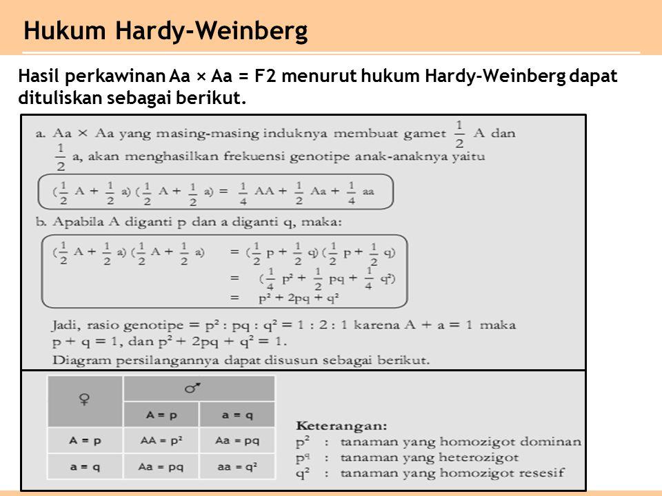 Hasil perkawinan Aa × Aa = F2 menurut hukum Hardy-Weinberg dapat dituliskan sebagai berikut.