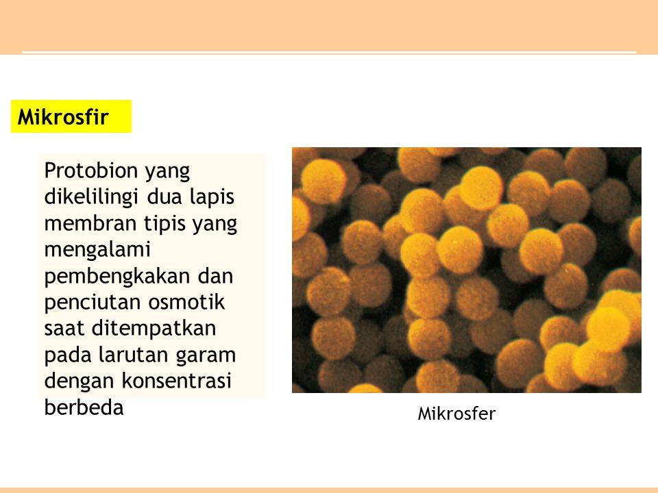 Mikrosfir Protobion yang dikelilingi dua lapis membran tipis yang mengalami pembengkakan dan penciutan osmotik saat ditempatkan pada larutan garam dengan konsentrasi berbeda Mikrosfer