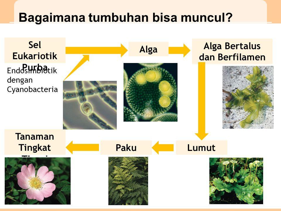 Bagaimana tumbuhan bisa muncul.