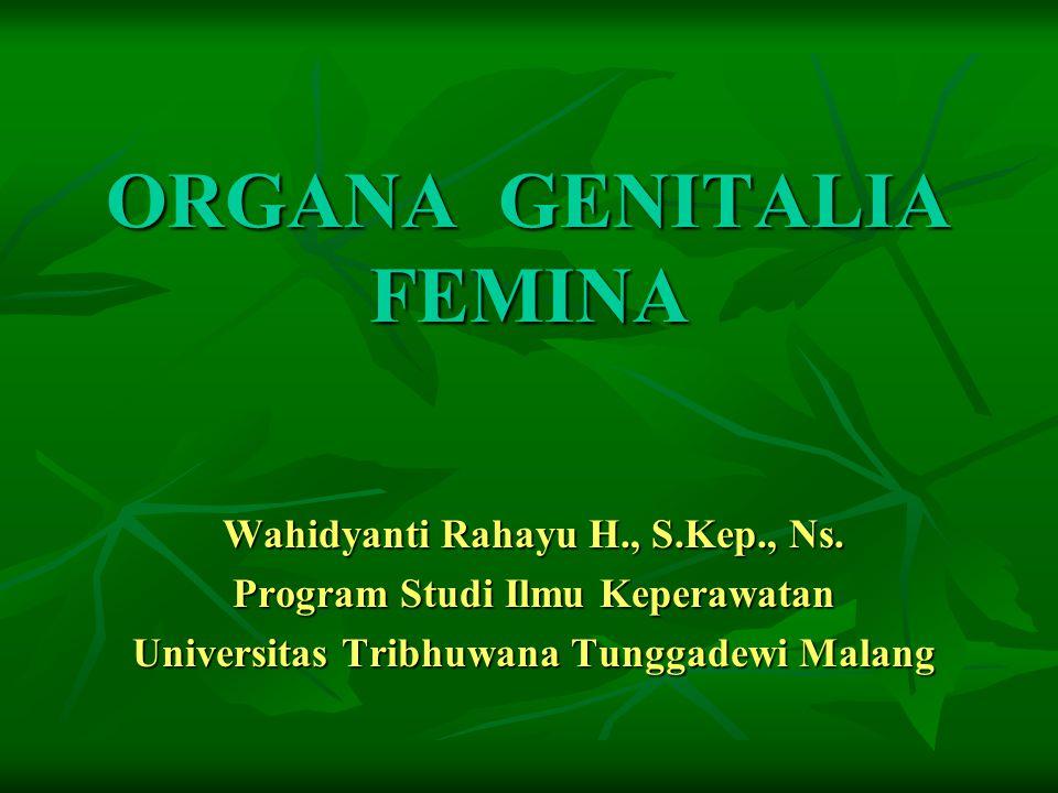 Organa Genitalia Femina 1.Ovarium 2.Tuba Fallopii 3.Uterus 4.Genitalia Externa