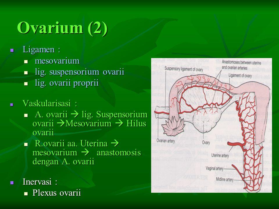 Vagina (1): Bagian Fornix vaginalis Fornix vaginalis Anterior Anterior Posterior  terdalam, berhubungan dgn.cavum douglasi Posterior  terdalam, berhubungan dgn.cavum douglasi Lateralis Lateralis Hymen : Hymen : Lipatan tempat masuk vagina kedlm vestibulum vaginae Lipatan tempat masuk vagina kedlm vestibulum vaginae Bentuk : annulare, crescent, cribriformis, imperforata, septata, Bentuk : annulare, crescent, cribriformis, imperforata, septata, Sesudah partus : introitus parous Sesudah partus : introitus parous Caruncula hymenalis pada multipara Caruncula hymenalis pada multipara Pada partus, bersama uterus berfungsi sebagai birth canal Pada partus, bersama uterus berfungsi sebagai birth canal