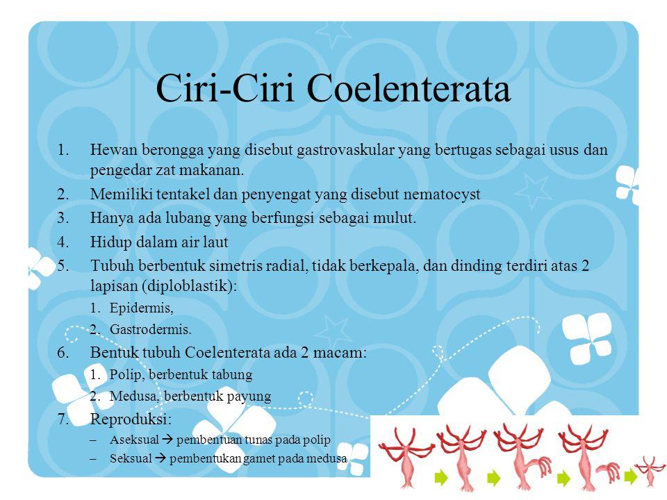 Ciri-Ciri Coelenterata 1.Hewan berongga yang disebut gastrovaskular yang bertugas sebagai usus dan pengedar zat makanan. 2.Memiliki tentakel dan penye
