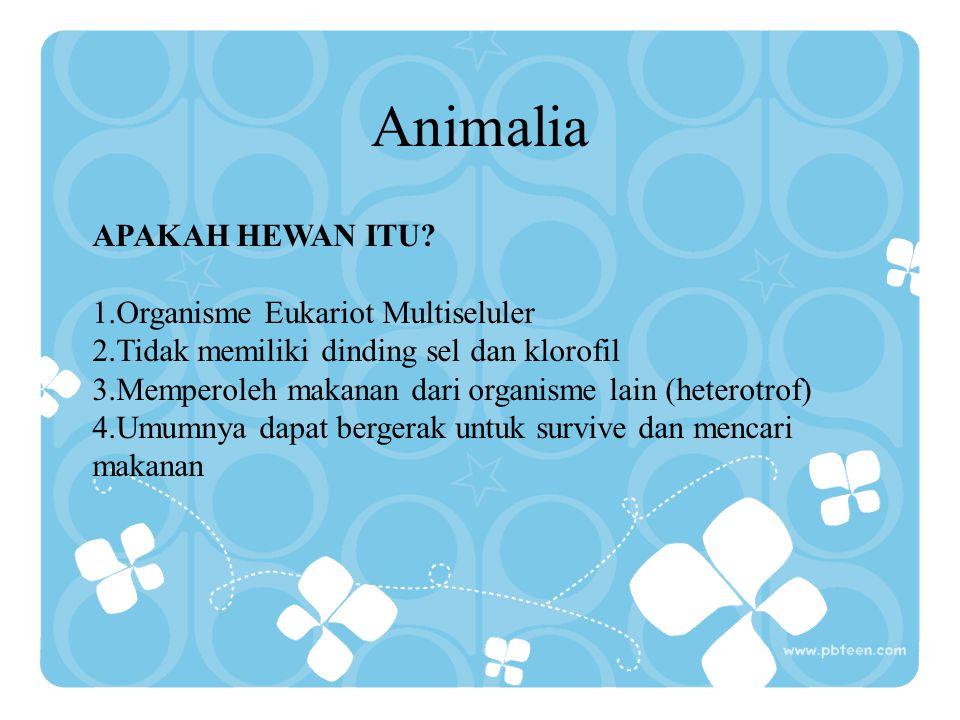 Animalia APAKAH HEWAN ITU? 1.Organisme Eukariot Multiseluler 2.Tidak memiliki dinding sel dan klorofil 3.Memperoleh makanan dari organisme lain (heter