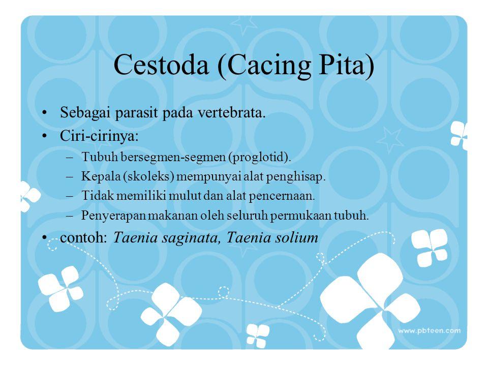 Cestoda (Cacing Pita) Sebagai parasit pada vertebrata. Ciri-cirinya: –Tubuh bersegmen-segmen (proglotid). –Kepala (skoleks) mempunyai alat penghisap.