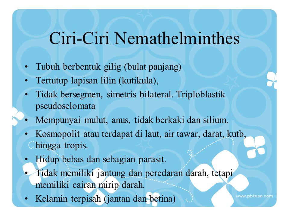 Ciri-Ciri Nemathelminthes Tubuh berbentuk gilig (bulat panjang) Tertutup lapisan lilin (kutikula), Tidak bersegmen, simetris bilateral. Triploblastik