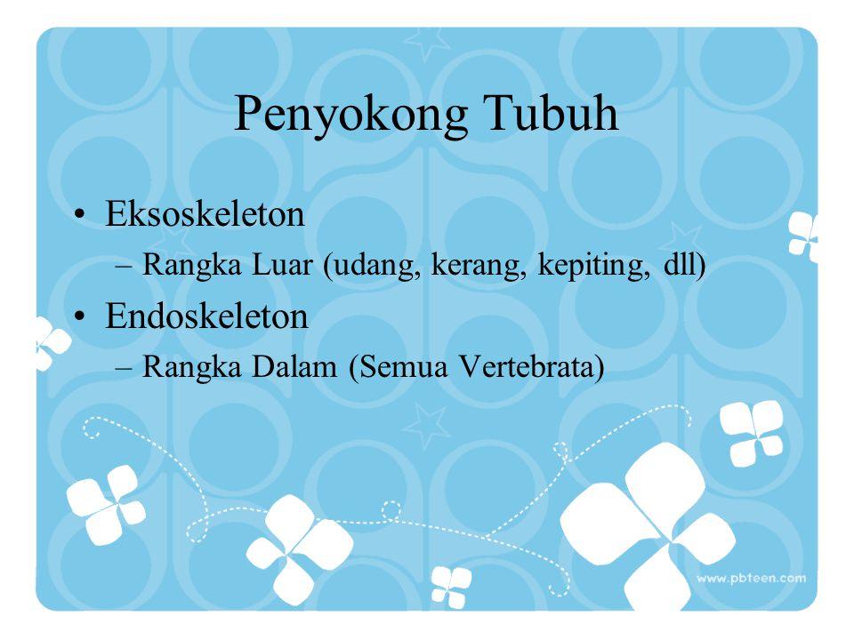 Penyokong Tubuh Eksoskeleton –Rangka Luar (udang, kerang, kepiting, dll) Endoskeleton –Rangka Dalam (Semua Vertebrata)
