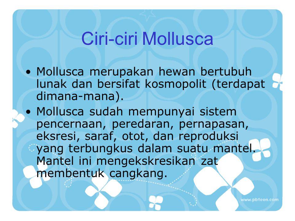 Ciri-ciri Mollusca Mollusca merupakan hewan bertubuh lunak dan bersifat kosmopolit (terdapat dimana-mana). Mollusca sudah mempunyai sistem pencernaan,