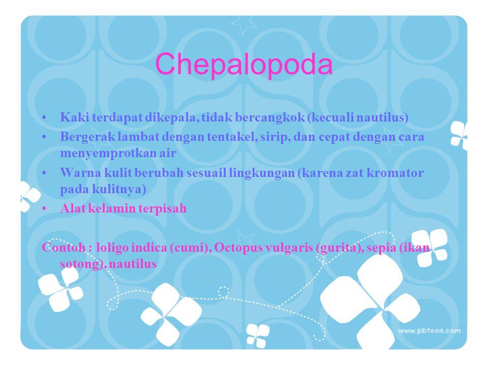 Chepalopoda Kaki terdapat dikepala, tidak bercangkok (kecuali nautilus) Bergerak lambat dengan tentakel, sirip, dan cepat dengan cara menyemprotkan ai