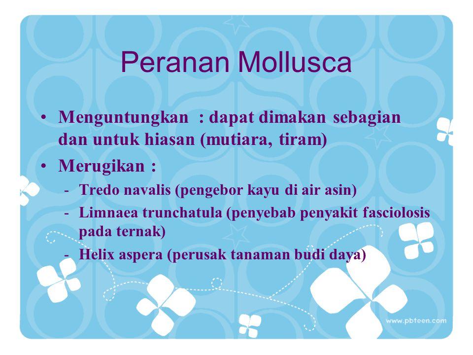Peranan Mollusca Menguntungkan : dapat dimakan sebagian dan untuk hiasan (mutiara, tiram) Merugikan : -Tredo navalis (pengebor kayu di air asin) -Limn