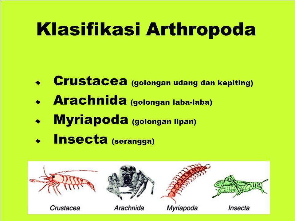 Crustacea (golongan udang dan kepiting) Arachnida (golongan laba-laba) Myriapoda (golongan lipan) Insecta (serangga) Klasifikasi Arthropoda