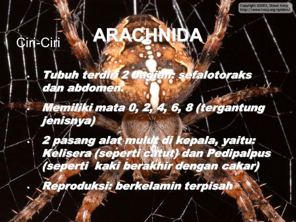 ARACHNIDA Tubuh terdiri 2 bagian: sefalotoraks dan abdomen. Tubuh terdiri 2 bagian: sefalotoraks dan abdomen. Memiliki mata 0, 2, 4, 6, 8 (tergantung