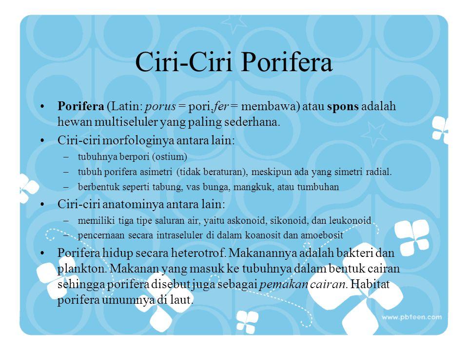 Ciri-Ciri Porifera Porifera (Latin: porus = pori,fer = membawa) atau spons adalah hewan multiseluler yang paling sederhana. Ciri-ciri morfologinya ant