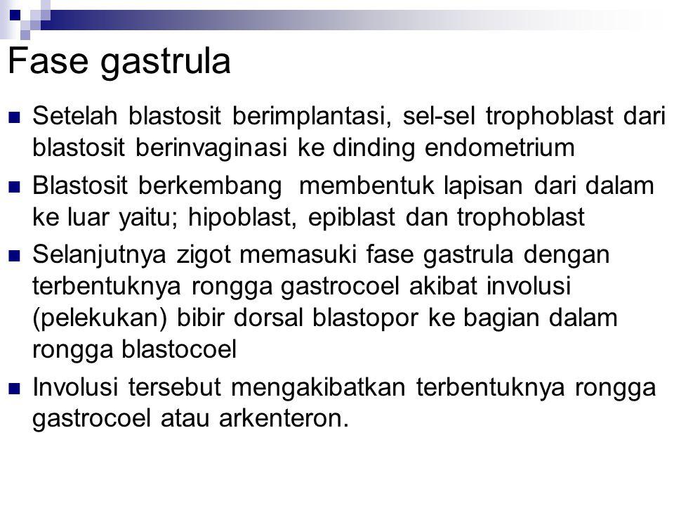 Fase gastrula Setelah blastosit berimplantasi, sel-sel trophoblast dari blastosit berinvaginasi ke dinding endometrium Blastosit berkembang membentuk