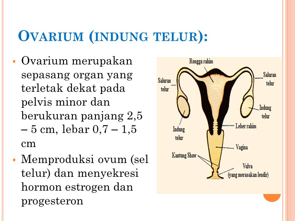 Penatalaksanaan - Koreksi gangguan - Terapi pengganti hormon (merangsang perkembangan karakteristik seks sekunder) - Bedah (koreksi abnormalitas struktural) - Manipulasi hormonal