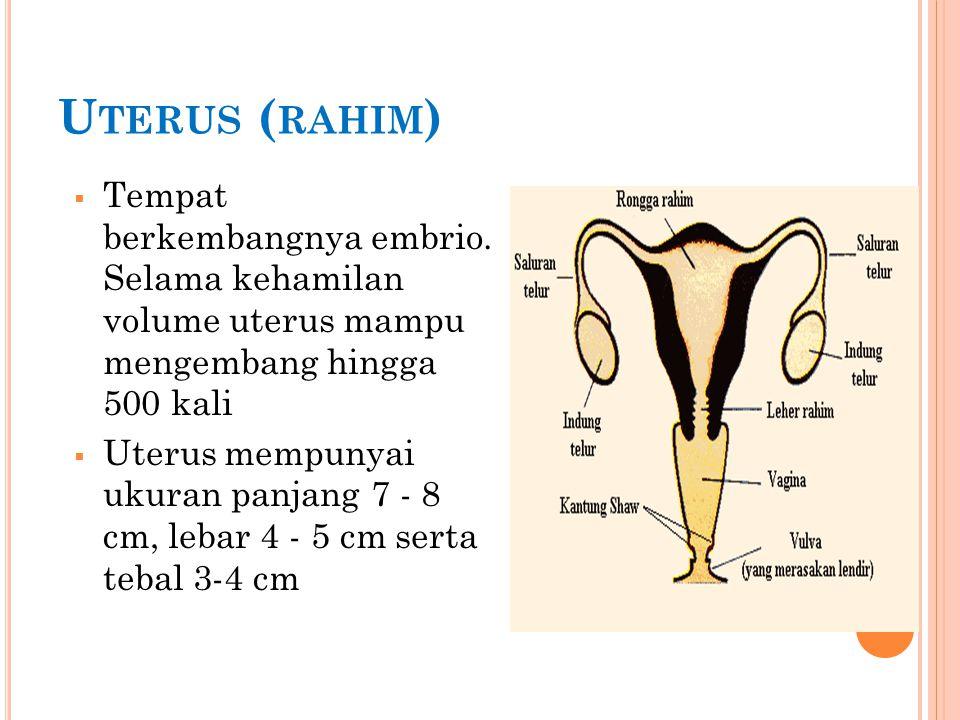 V AGINA  Tempat penis pada saat kopulasi dan sebagai jalan keluar bayi pada proses kelahiran  Merupakan saluran kopulasi yang menghubungkan vulva dan uterus.