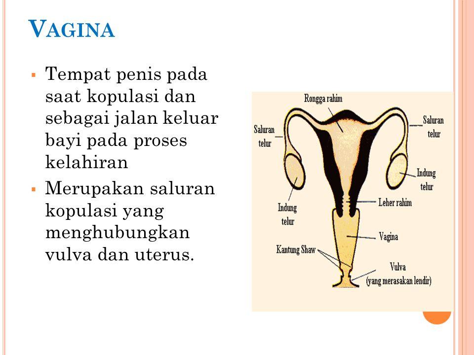 b.Oligomenore siklus haid lebih panjang, lebih dari 35 hari.