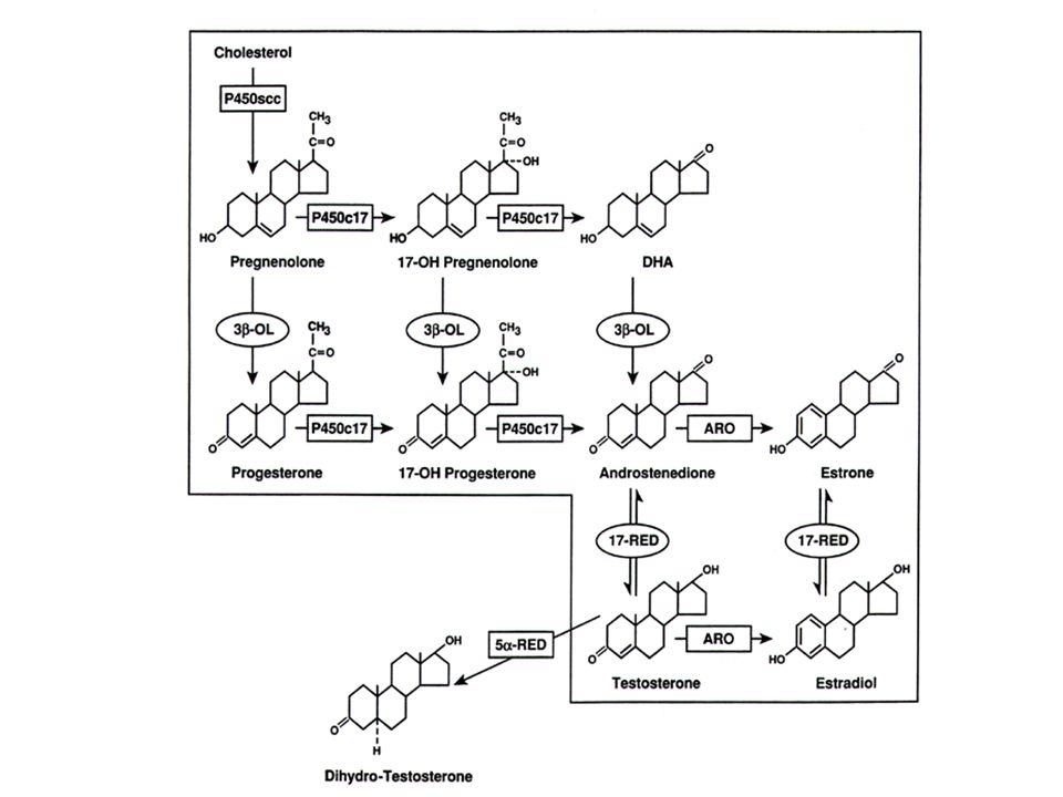 Kelas Hormon Hormon Steroid vs.