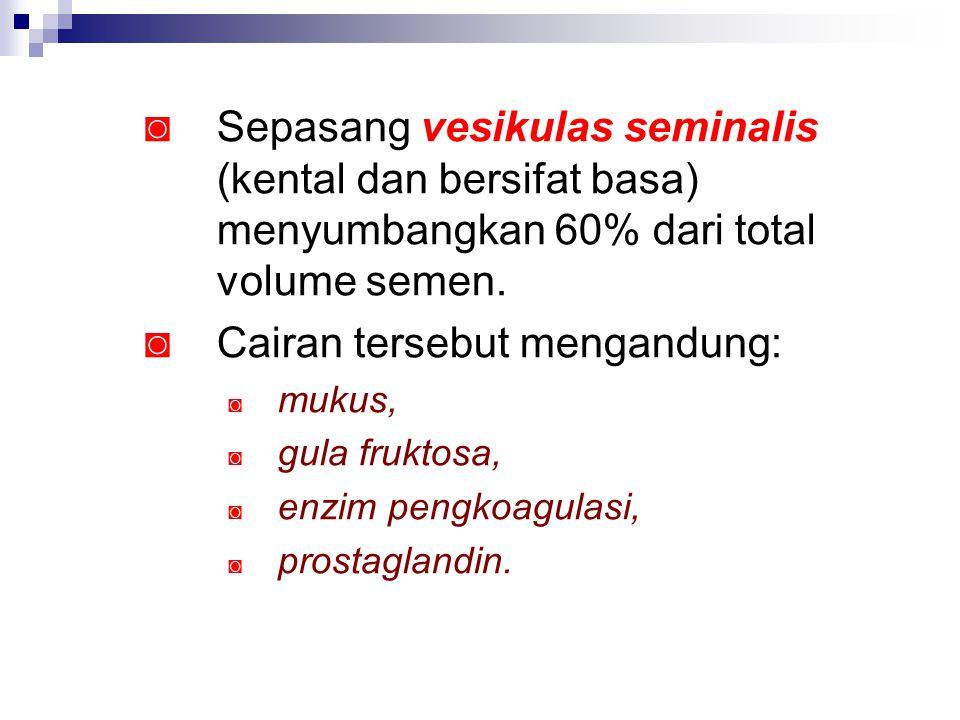 ◙ Sepasang vesikulas seminalis (kental dan bersifat basa) menyumbangkan 60% dari total volume semen. ◙ Cairan tersebut mengandung: ◙ mukus, ◙ gula fru
