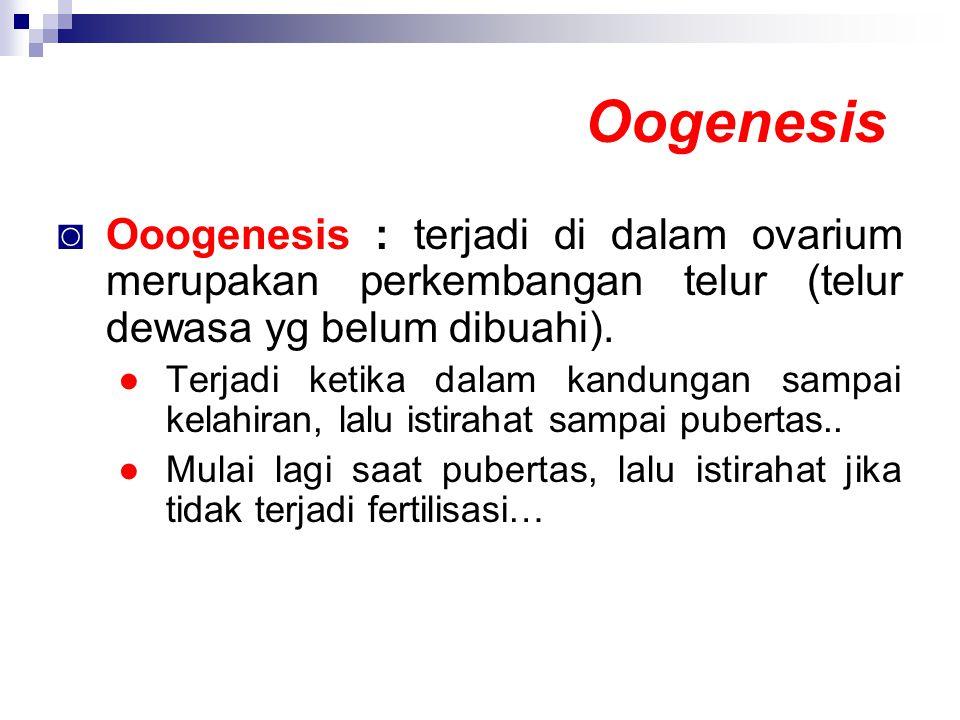 Oogenesis ◙ Ooogenesis : terjadi di dalam ovarium merupakan perkembangan telur (telur dewasa yg belum dibuahi). ●Terjadi ketika dalam kandungan sampai