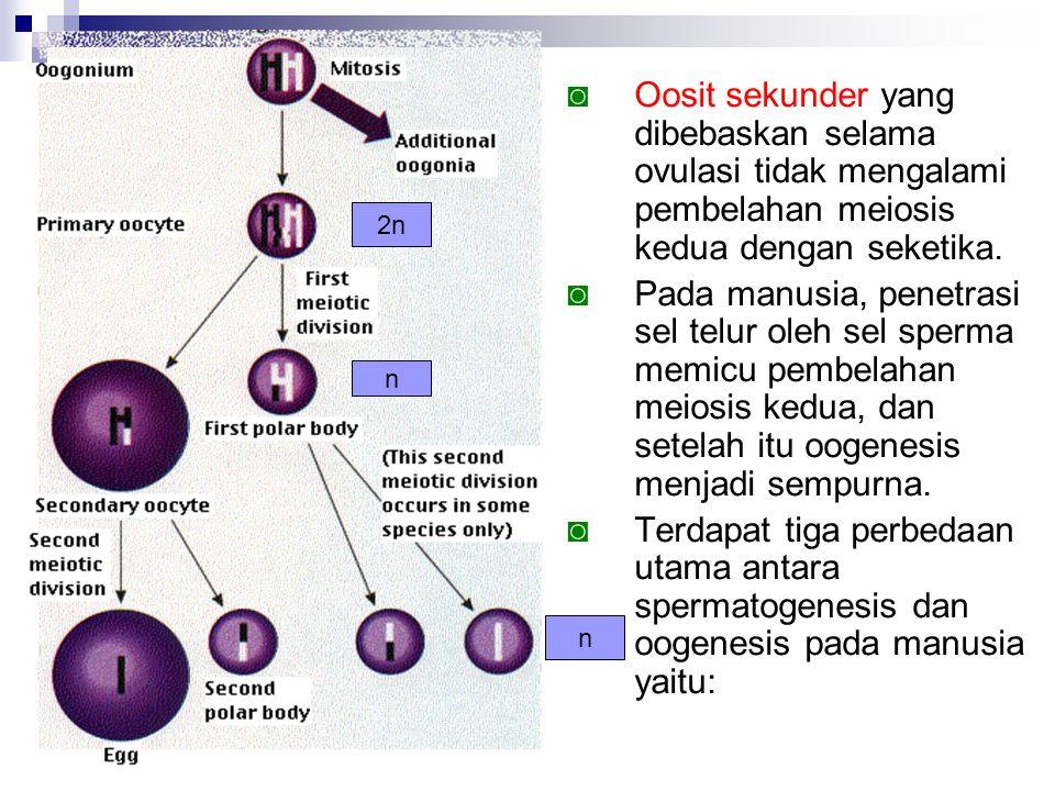 ◙ Oosit sekunder yang dibebaskan selama ovulasi tidak mengalami pembelahan meiosis kedua dengan seketika. ◙ Pada manusia, penetrasi sel telur oleh sel