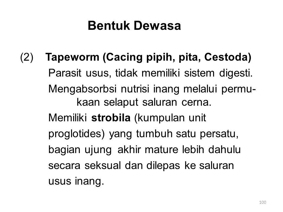 Bentuk Dewasa (2)Tapeworm (Cacing pipih, pita, Cestoda) Parasit usus, tidak memiliki sistem digesti. Mengabsorbsi nutrisi inang melalui permu- kaan se