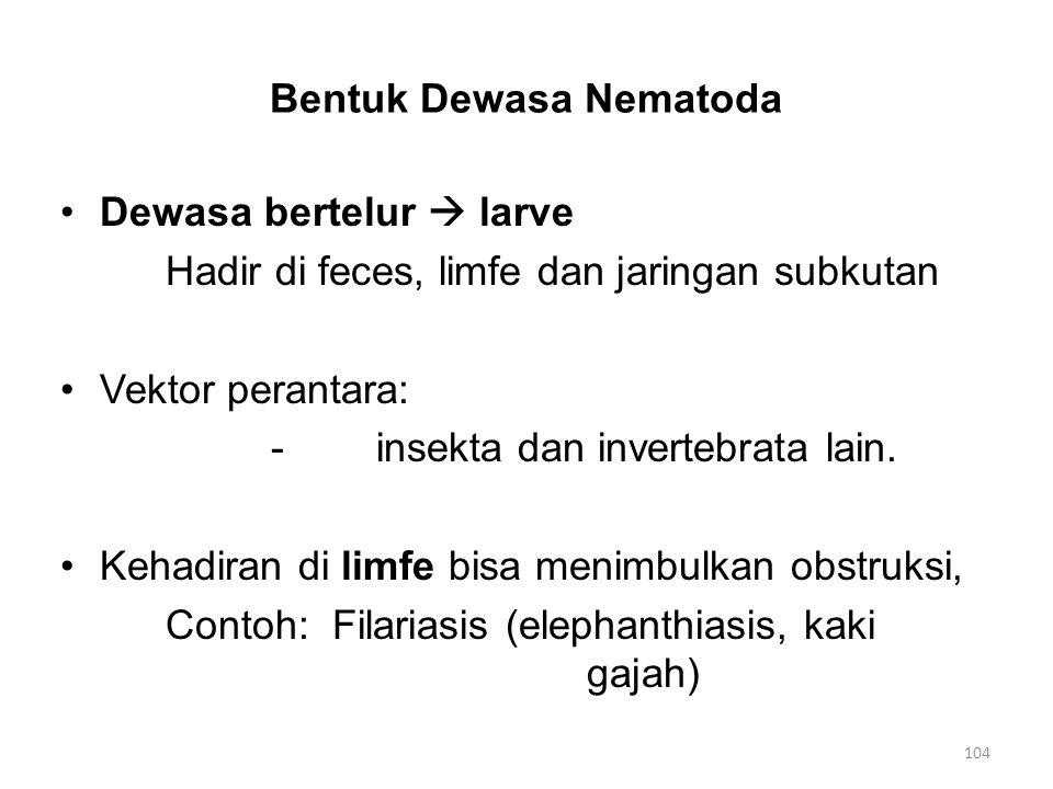 Bentuk Dewasa Nematoda Dewasa bertelur  larve Hadir di feces, limfe dan jaringan subkutan Vektor perantara: -insekta dan invertebrata lain. Kehadiran