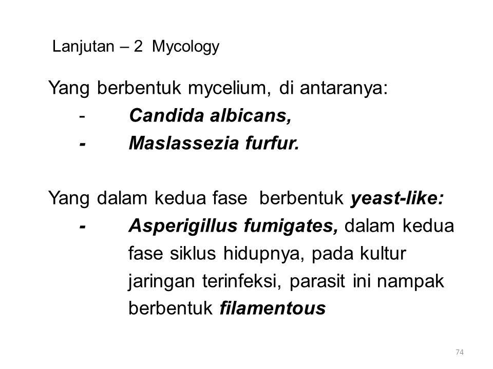 Lanjutan – 2 Mycology Yang berbentuk mycelium, di antaranya: -Candida albicans, -Maslassezia furfur. Yang dalam kedua fase berbentuk yeast-like: -Aspe